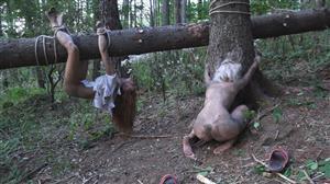 horrorporn-e04-the-dark-side-of-the-woods.jpg